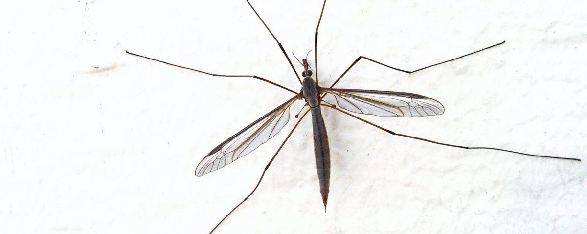 sivrisinek_ilaçlama