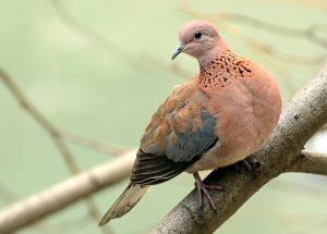 kuş biti ilaçlama antalya